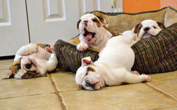 Rest_day_Lazy_dog_crossfit_fibre