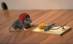 a.aaa-helmet-rat