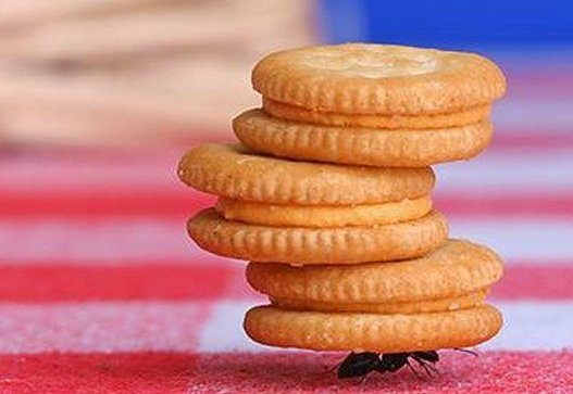 co-ant-with-cookie