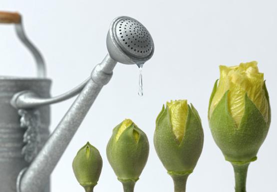 watering-buds