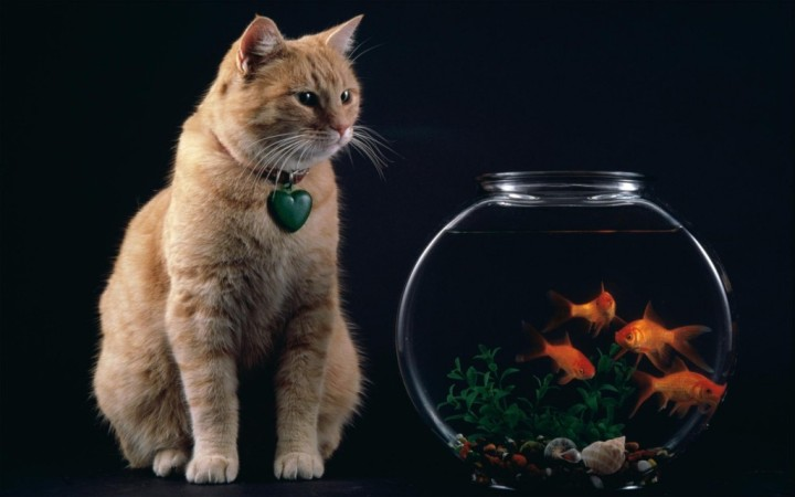 Temptation_-_Cat_and_Goldfish_Bowl-1024x640