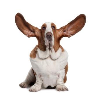 listeningdog