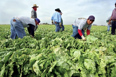 0409-cmexico-immigrants-mexico-harvest