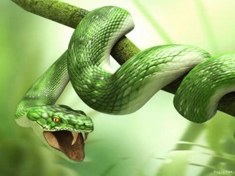 441673-serpent