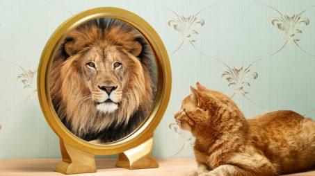 201405-omag-lion-949x534-670x377
